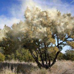 tree-pollen